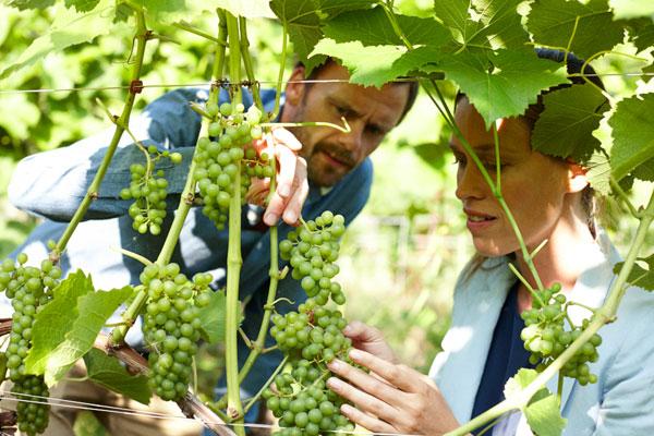 """Die """"Fünische Weinroute"""" auf der dänischen Ostseeinsel Fünen"""