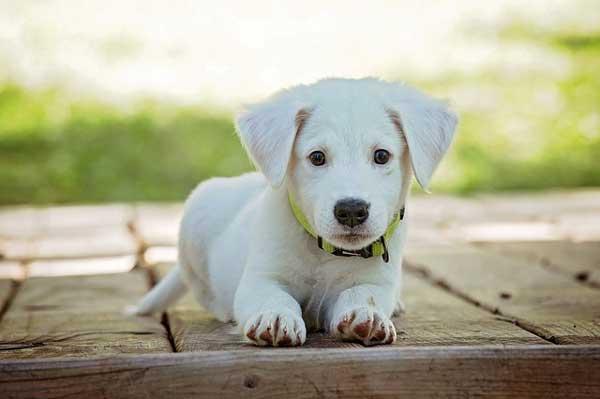 Hundstage in Holstebro