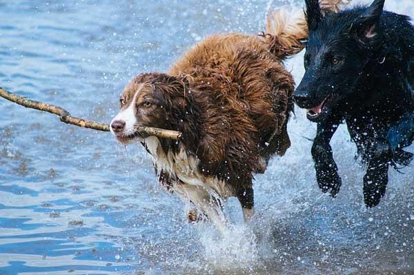 Hundefestival an der dänischen Nordsee in Thorsminde