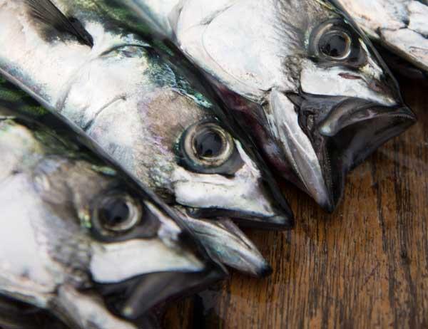 Makrelenfestival im Norden Seelands – dänische Hygge ganz maritim